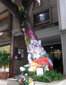 albero Giovanni Falcone