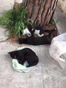 gatti-morti-monte-san-calogero-copia