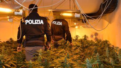 palermo polizia piantagione marijuna