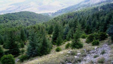 riserva naturale egionale Monte Carcaci